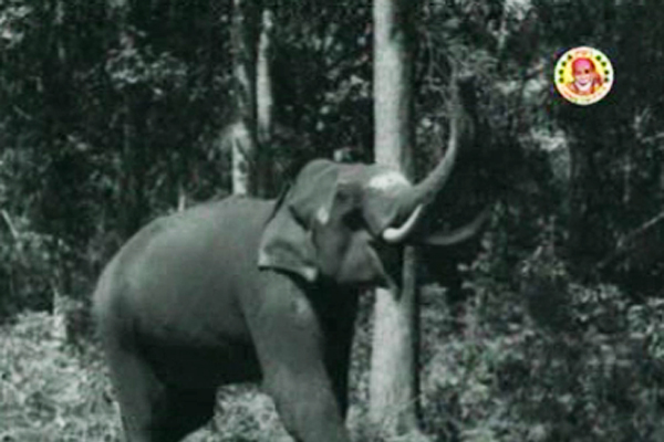 Bheema the Elephant from Aana Valarthiya Vanambadi (1960)