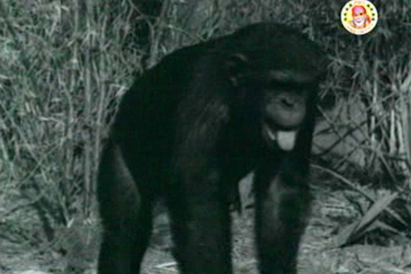 Pedro the Chimp from Aana Valarthiya Vanambadi (1960)